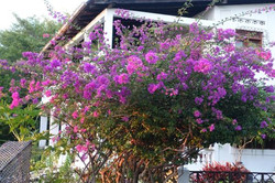 tamarin-place-charmant(2)