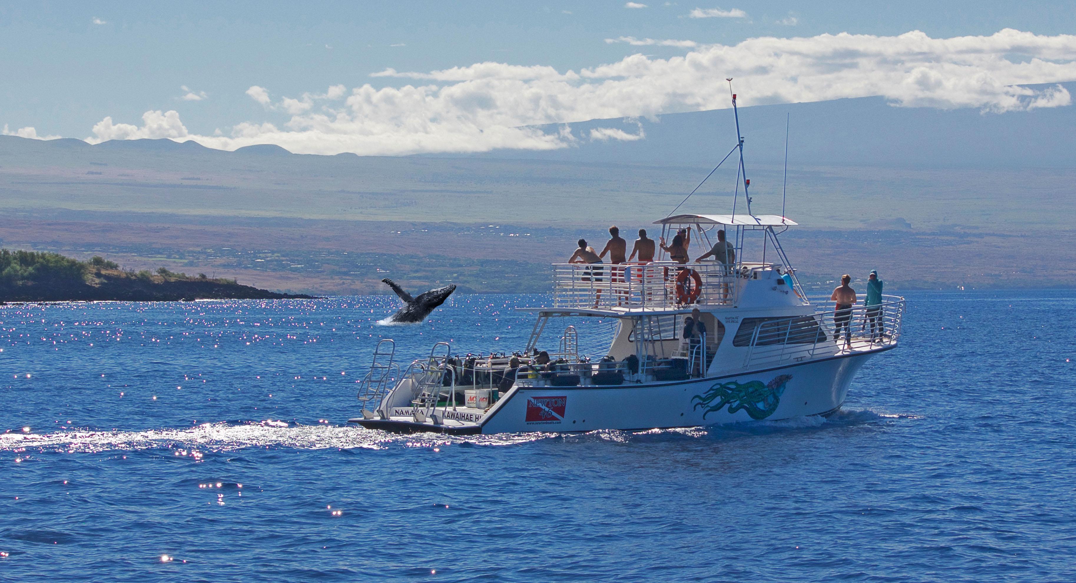 Whale-n-Namaka-Crop