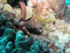 Eel on the Kona Kohala Coast