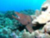 moray eel hawaii