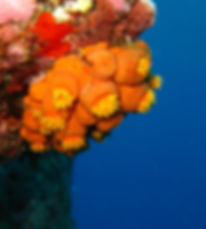 Strange underwater creatures of the kona kohala coast