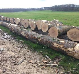 Ash milling timber