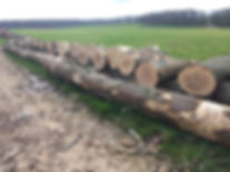Ash milling log for table top planks
