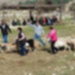 גדר, כבשה וא.נשים עם אתגרים