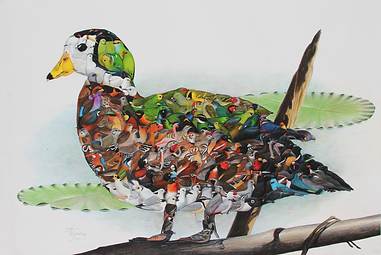 """African Pygmy Goose, 20x30"""" - $200 - IN STOCK"""