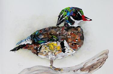 Wood Duck Composite