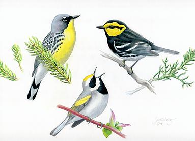 Warblers.png