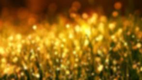 green-grass-close-up-photo-1125769.jpg