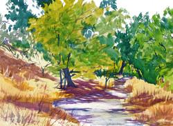 Putah Creek Path.JPG