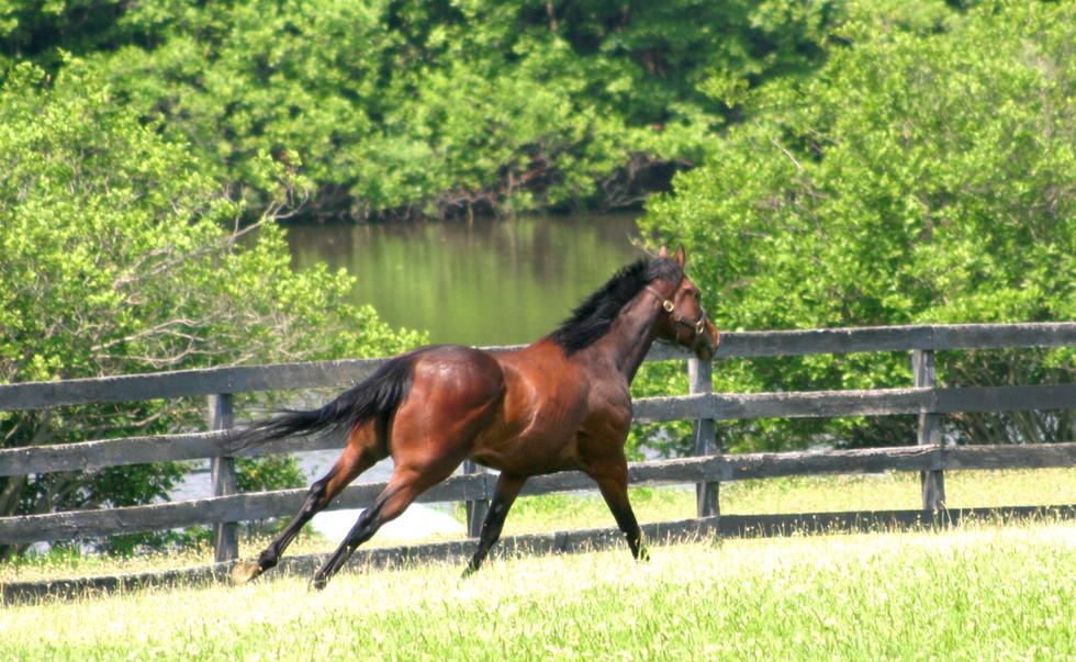 NJEC horse running by pond.jpg