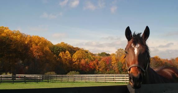 NJEC fall clinic horse paddock.jpg