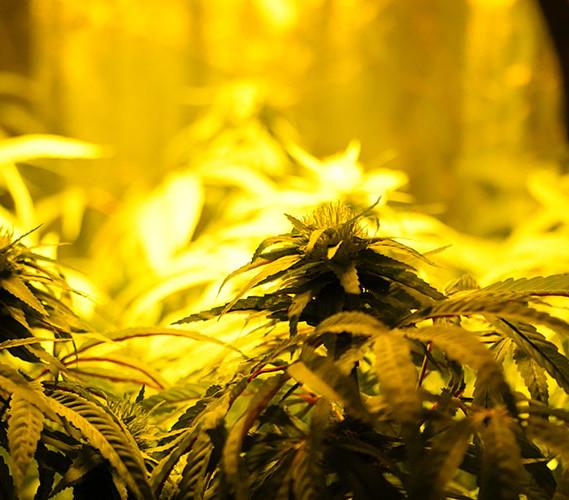 hanger plant.jpg