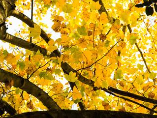 Hello autumn and UK!