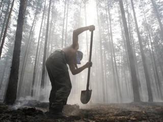 В Совете Федерации предлагают обязать арендаторов леса тушить пожары
