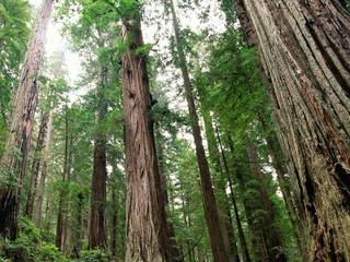 Счетная палата выявила многочисленные нарушения в использовании сельхозземель и управлении лесами