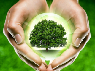 Башкортостан вошел в десятку лучших по лесовосстановлению в 2016 году