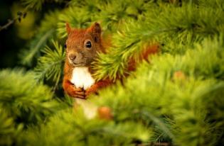Рослесхозом отменен методический документ по обеспечению санитарной безопасности в лесах