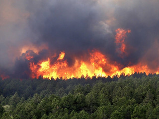 Регионы, не справляющиеся с лесными пожарами, лишат полномочий