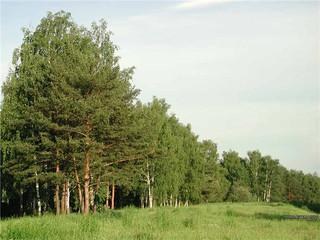 Модель лесной отрасли России предлагается создать на базе Красноярского края
