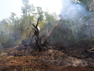 Рослесхоз: о лесопожарной обстановке на территории Российской Федерации