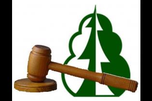 Республика Башкортостан является лидером по объему реализованной древесины