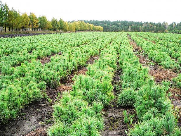 Lesovosstanovlenie.jpg