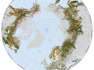 Расчетная периодичность смены древостоев в северных лесах мира в 2000-2013 г.г.