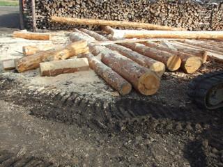 Изменения в законодательстве упростят лесозаготовку для малого бизнеса