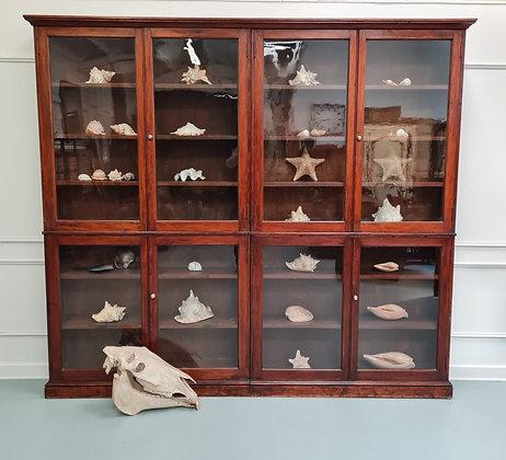 Large Antique Museum Cabinet c1900