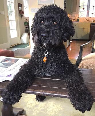 Receptionist Ollie