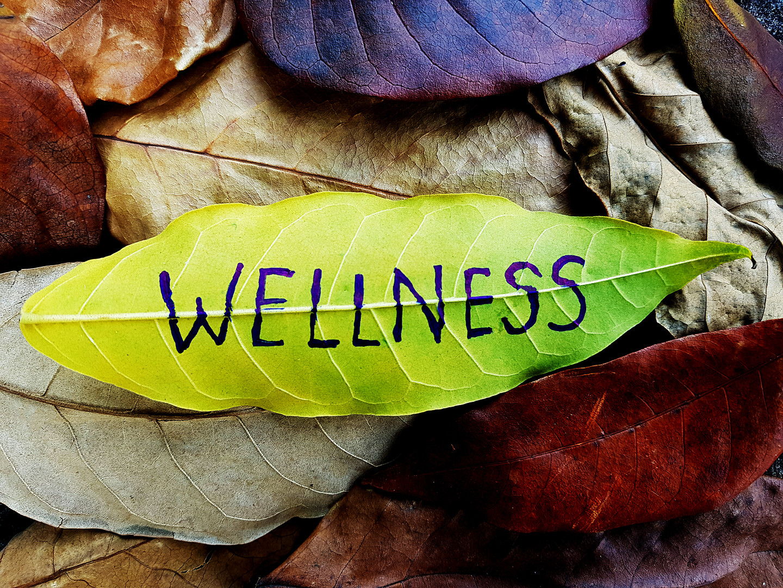Wellness concept written on leaf.jpg
