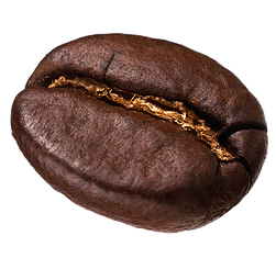 coffee bean single.png