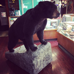 GOLDSTONE_picker_pick_blog_mocaby_moveonpickon_bear_taxidermy_mount