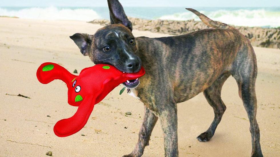 KONG Belly Flops Lobster