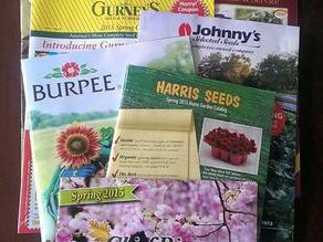 Navigating Garden Catalogs