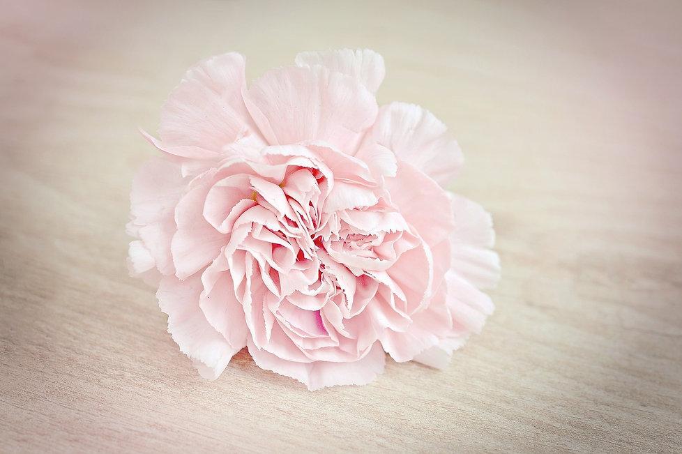flower-1364746_1920.jpg
