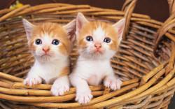 cute-kittens-in-a-basket-46860-2560x1600