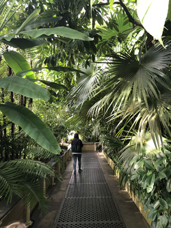 Leafy tropical greenhouse