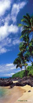 """""""Steppin' Out"""" - Maui, HI"""