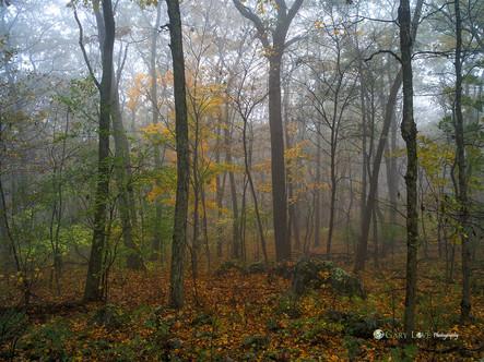 """Autumn Serenade"" - Virginia"