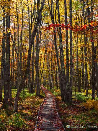 """I Walk the Line"" - Maine"
