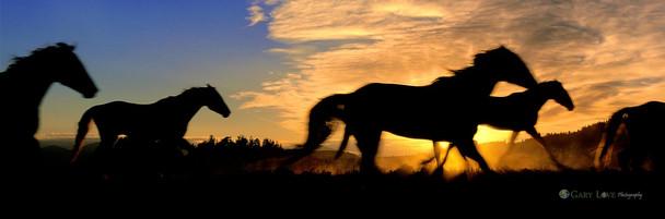 """Born to Run"" - Wyoming"