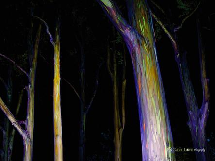 """Rainbow in the Dark"" - Maui, HI"