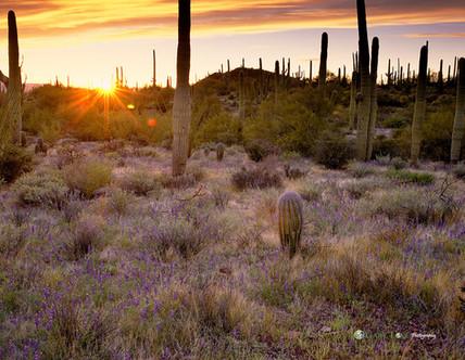 """Southbound"" - Arizona"