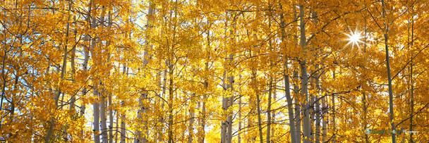 """""""The Sound of Sunshine"""" - Colorado"""