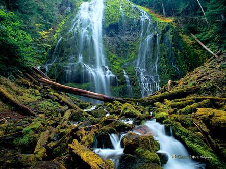 """Free Fallin' "" - Oregon"