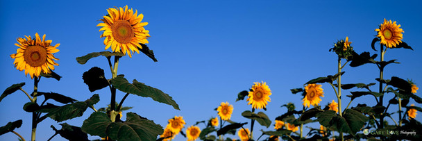 """""""Good Day Sunshine"""" - South Dakota"""
