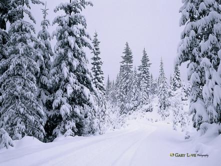 """Hazy Shade of Winter"" - Oregon"