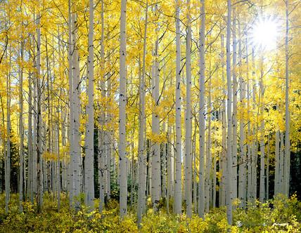 """""""Mellow Yellow"""" - Colorado"""