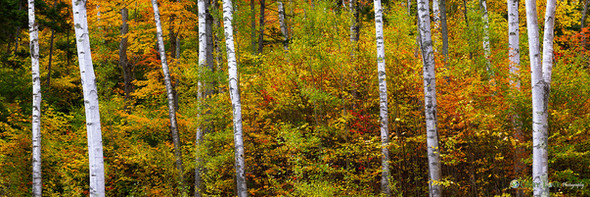"""""""The Space Between"""" - New Hampshire"""
